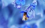 lebah kecil
